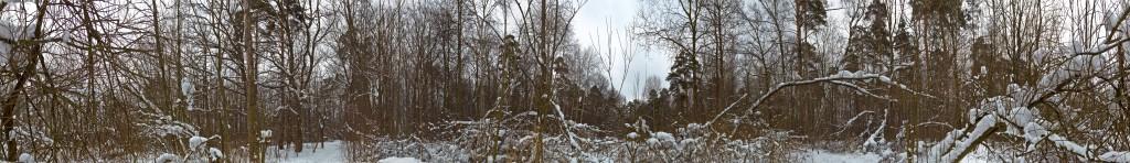 Измайловский лес панорама 360
