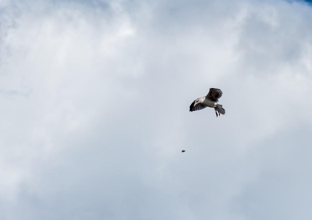 Трагедия чайки на северном море